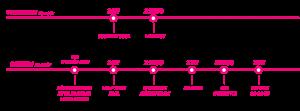 timeline5